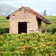 Hiking beautiful Burgundy, France. Creative Commons:Megan Mallen