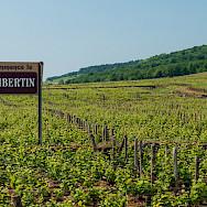 Entering the Chambertin vineyard region. Flickr:Anna & Michal