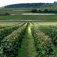 Côte de Beaune wine-growing region of Beaune, Burgundy, France. Flickr:Megan Cole