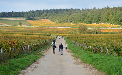 Walking the many vineyards through Dijon and Burgundy in France.