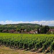 Burgundy abound with vineyards. Flickr:Navin Rajagopalan