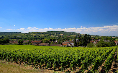 Burgundy abound with vineyards. Flickr:Navin Rajagopalan