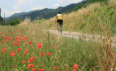 Riding past wildflowers on this Tuscany Italy Bike Tour.