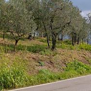 Open road awaits in Tuscany, Italy.