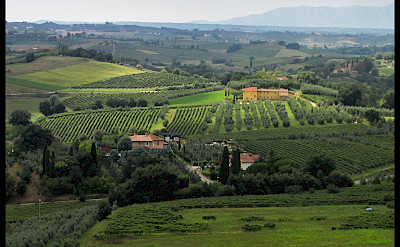 Vineyards & orchards in Vinci, Tuscany, Italy. Flickr:Flavio