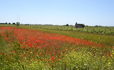 Wildflower fields forever in Italy!