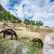 Horses adorn the landscape of Macedonia. Flickr:Milo van Kovacevic