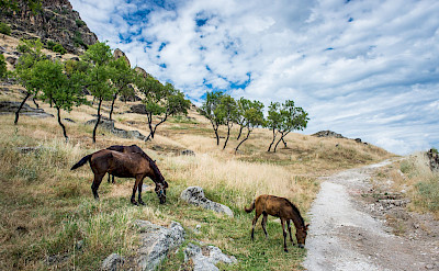 Horses adorn the landscape of Macedonia. Flickr:Milo van Kovacevic