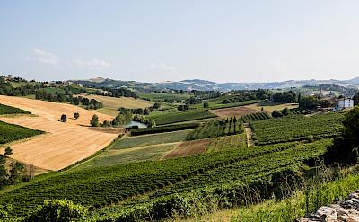 Castelvetro di Modena's countryside, Emilia-Romagna, Italy. Flickr:Bill Stilwell