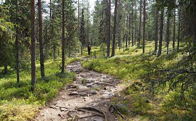 Through the forest in Pallas-Yllästunturi National Park, Western Lapland, Finland. Photo via TO