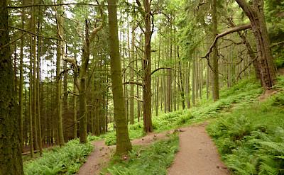 Hiking through Balmaha, Scotland. Flickr:Andrew Bowden