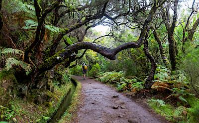 Hiking Madeira Island, Portugal. ©TO