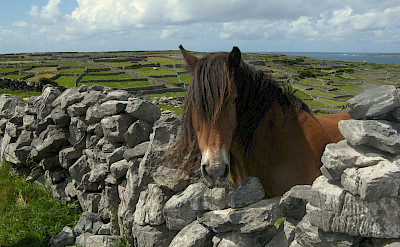 Pony in Connemara, Ireland. Photo via TO