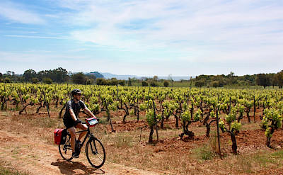 Biking amongst the vineyards in Provence-Alpes-Côte d'Azur - the French Riviera! Photo via TO