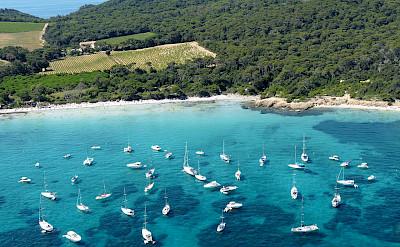 Parc National at Porquerolles Island, Provence-Alpes-Côte d'Azur, France. Creative Commons:Yyuri1989
