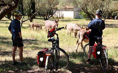 Bike rest on Porquerolles Island, Provence-Alpes-Côte d'Azur, France. Photo via TO