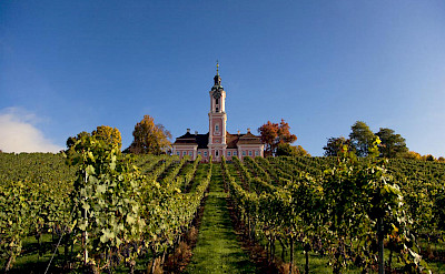 Vineyards around Lake Constance. © TO