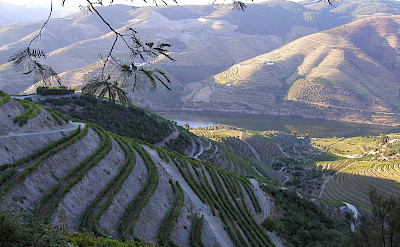 Vineyard terraces on the Douro Valley in Portugal. CC:BernardBill5