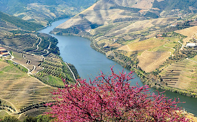 Terraced vineyards on the Douro River E-Bike & Boat Tour. © TO