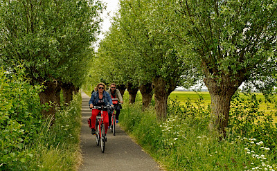 One of many lovely cycle paths in Holland | Serena | Bike & Boat