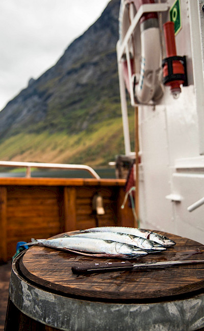 Fresh fish on the Western Fjords Norway Bike & Boat Tour
