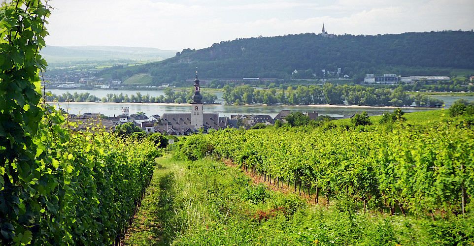 Vineyards along the Rhine River in Rüdesheim, Germany. Flickr:Andrew Gustar