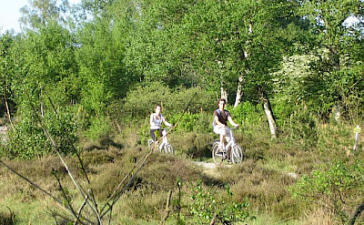 Cycling in De Hoge Veluwe Natinal Park