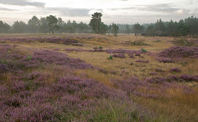 Moorlands, sand dunes, woods and heather make up De Hoge Veluwe National Park.