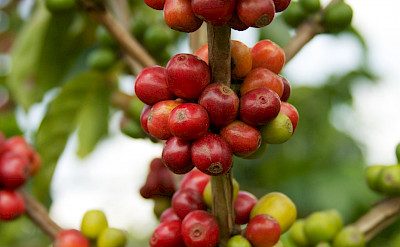 Coffee beans in Colombia, of course. Flickrd:McKay Savage