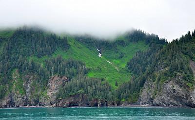 Foggy morning at Kenai Fjords.