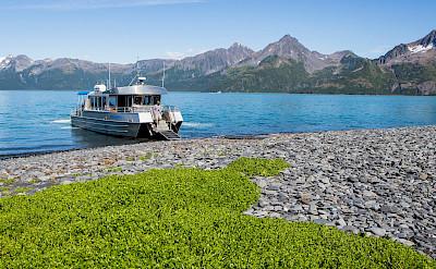 Glaciers and boats at the Kenai fjords.