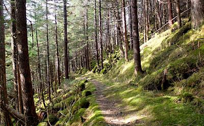 Alaska hiking trail. Flickr:Joseph