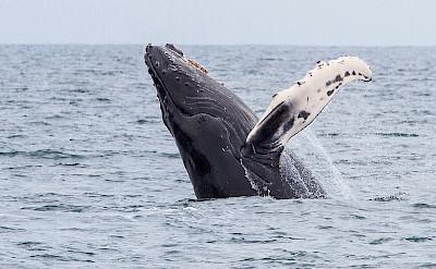 Whales in Alaska.