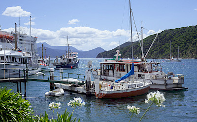 Picton on Marlborough Region of South Island, New Zealand. Flickr:Daniel Chodusov