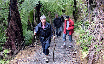 Walking on the Marlborough Sounds Hike & Cruise Tour in New Zealand.