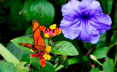 Amazing flora & fauna in Colombia! Flickr:Reg Natarajan