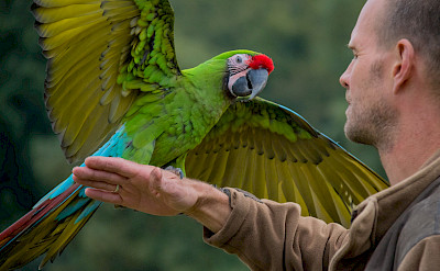 Military Macaw in Colombia. Flickr:Susanne Nilsson