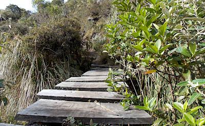 Bridge in Sumapaz Páramo in Sumapaz National Park of Colombia. Flickr:Daniel Amariles