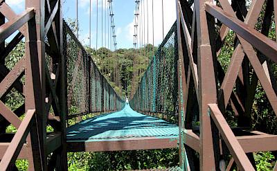 Bridge at the Monteverde Cloud Forest in Costa Rica. Flickr:Benet2006