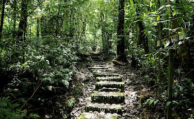 Monteverde Cloud Forest in Costa Rica. Flickr:Peter Hook
