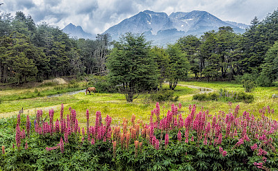 Ushuaia on the southern coast of Tierra del Fuego National Park, Argentina. Flickr:Steven dosRemedios