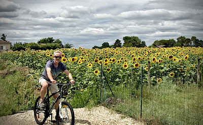 Biking among sunflowers in the Bordeaux region of France. ©Photo via TO