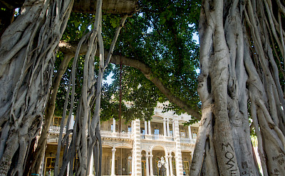 Fancy architecture & trees in Hawai'i. Flickr:Erik Cooper