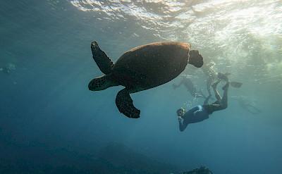 Snorkeling with sea turtles, Hawaii. ©TO