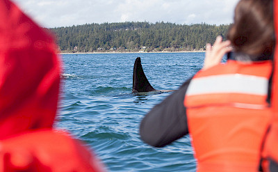 Guests see orcas in San Juans, Pacific Northwest. ©TO