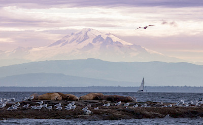 Mount Baker and wildlife, Pacific Northwest. ©TO