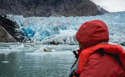 Seal on iceberg at Twin Sawyer Glacier, Alaska. ©TO