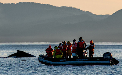 Whale spotted on a skiff ride in Alaska. ©TO