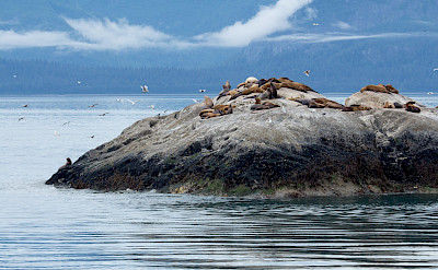 Seals on Marble Island in Alaska. Flickr:Mark Byzweski