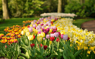 In April & May, the famous Keukenhof will be open near Amsterdam. Flickr:gnuckx